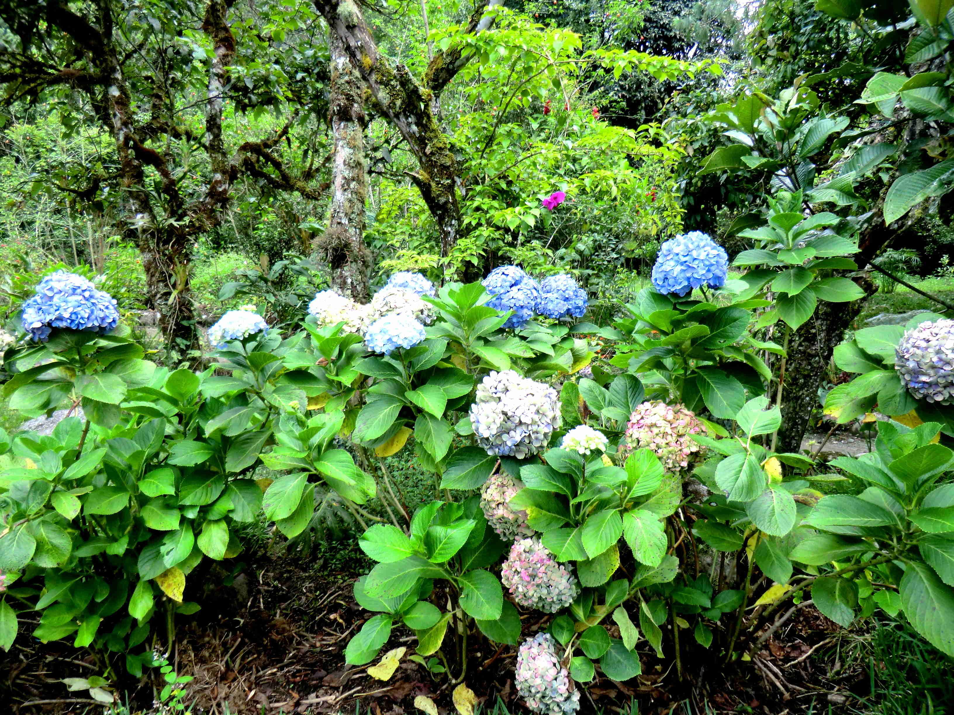 Rio Verde Цветы
