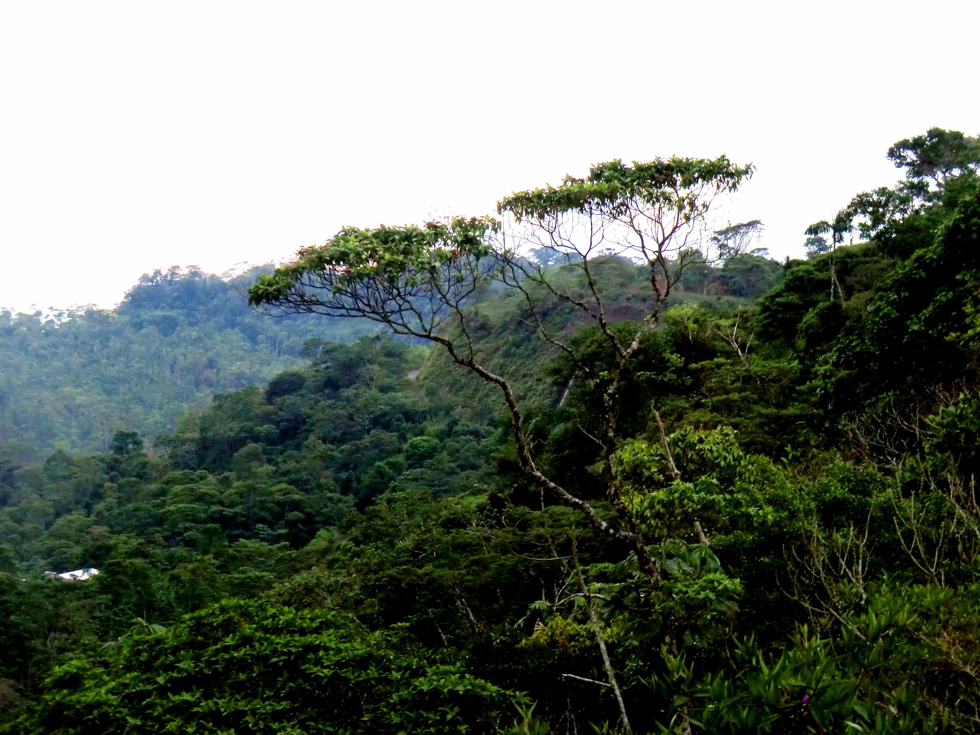 лес, Эквадор