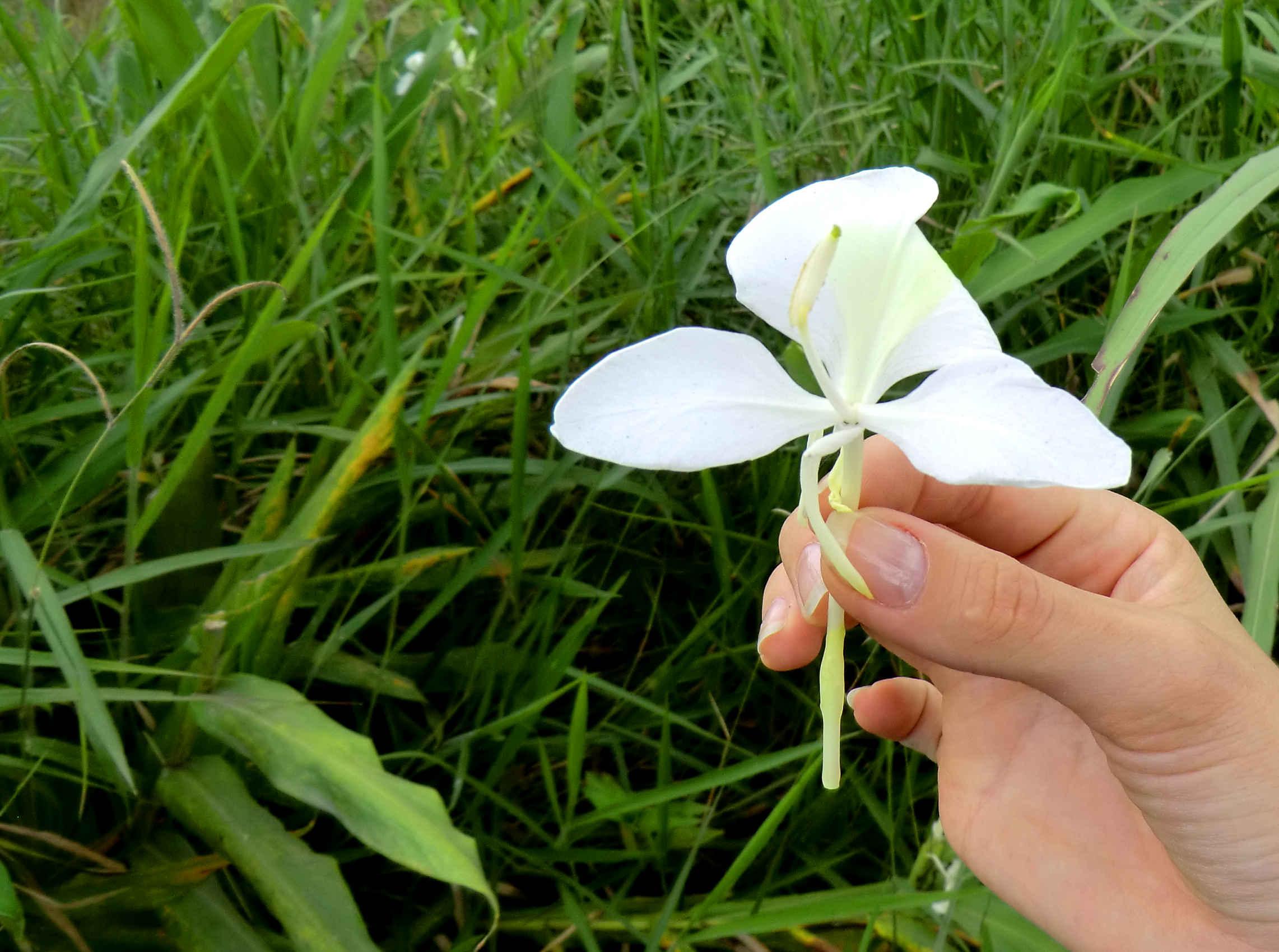 ферма в Эквадоре дикие орхидеи