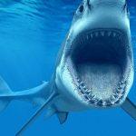 Десятки мигрантов растерзали акулы в Средиземном море