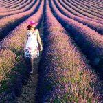 Где и как найти лавандовые поля в Провансе