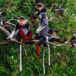 12 лучших национальных парков во Вьетнаме