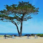 12 лучших занятий в Монтерее, Калифорния