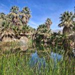 12 лучших занятий в Палм-Спрингс, Калифорния